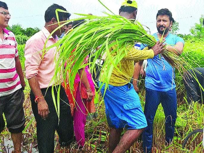 3 tonnes of pasture from the labor force for flood affected animals; Assistance from farmers in Raigad district | पूरग्रस्त जनावरांसाठीश्रमदानातून १०७ टन चारा; रायगड जिल्ह्यातील शेतकऱ्यांकडून मदत