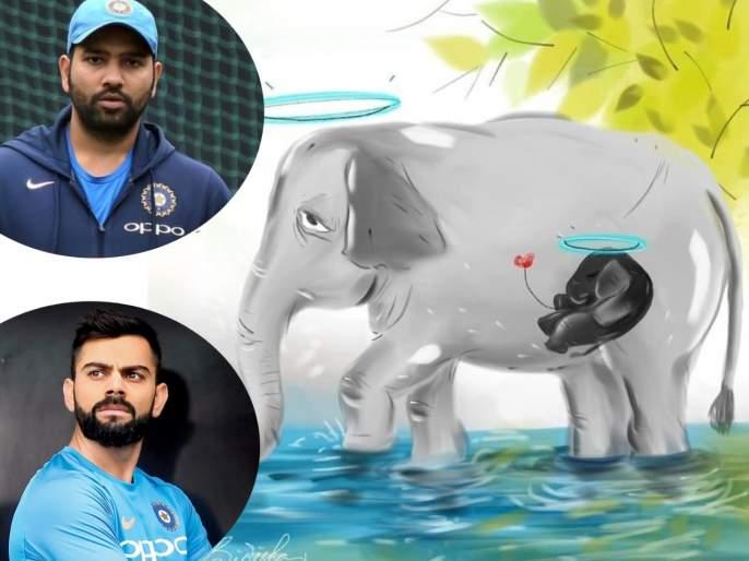 Rohit Sharma, Virat Kohli, Sunil Chhetri condemn Kerala elephant killing | आपण अजूनही रानटीच आहोत! गर्भवती हत्तीणीच्या हत्येचा रोहित, विराटसह क्रीडा विश्वातून तीव्र निषेध