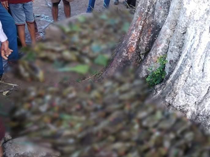 300 poplars die due to hailstorm in the reservoir | भंडाऱ्यात गारपिटीमुळे 300 पोपटांचा मृत्यू