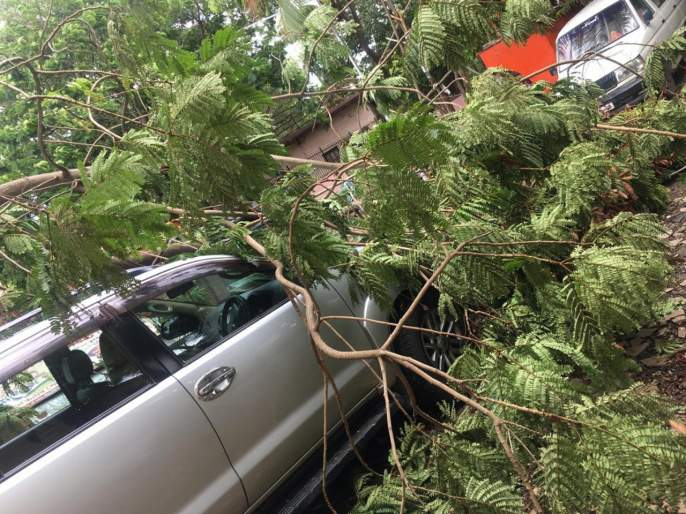 Citizens beware! Do not stand under the trees | Video : नागरिकांनो सावध राहा! झाडांखाली उभे राहू नका
