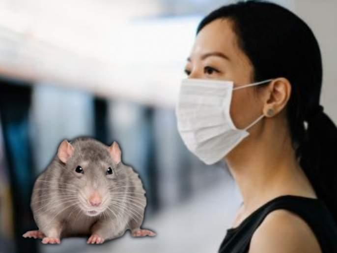 Cdc warns of aggressive cannibal rats facing shortage of garbage to eat myb   लॉकडाऊनमध्ये उंदरांमुळे माणसांना असू शकतो संक्रमणाचा धोका; तज्ज्ञांचा दावा