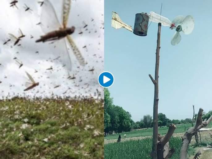 Desi jugaad to keep locusts away tiktok video is massively viral myb | टोळांची धाड पळवून लावण्यासाठी शेतकऱ्याने केलाय भन्नाट जुगाड! पाहा व्हायरल व्हिडीओ