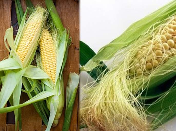 Health Tips Marathi : know amazing health benefits corn silk   मक्याच्या चमकदार धाग्याचे 'हे' फायदे वाचाल तर फेकण्याआधी १० वेळा विचार कराल