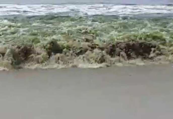 Canacona coast become green in past few days affected tourism activities   काणकोणातील समुद्राचे निळे पाणी अचानक झाले हिरवे, तज्ज्ञांनी दिली धोक्याची सूचना