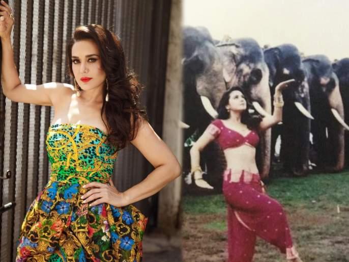 Preity Zinta shared a throwback photo   प्रिती झिंटाने शेअर केला थ्रोबॅक फोटो, म्हणाली- आखिर हाथी क्या सोच रहे होंगे?