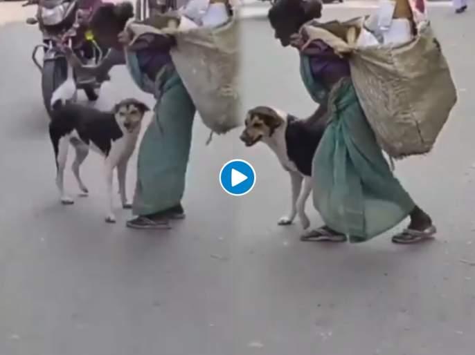 IAS shares heart warming video woman save dog from bike footage is going viral | माणुसकीला सलाम! कचरा वेचणाऱ्या महिलेनं वाचवले श्वानाचे प्राण; व्हिडीओ समोर येताच IAS म्हणाले.....