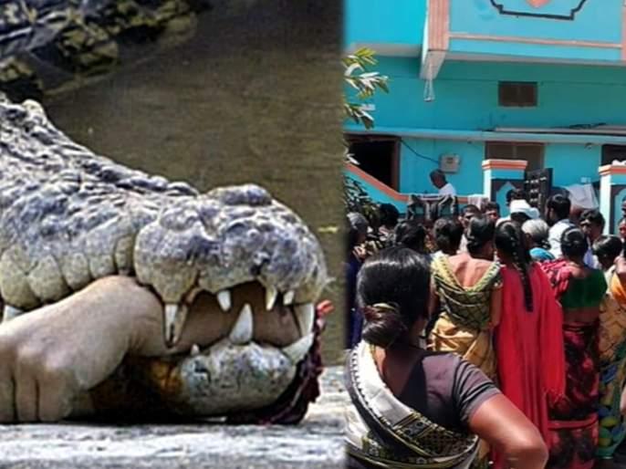 Crocodile pull a man killed manjeera wild life sangareddy telangana | Crocodile pull a man killed : बापरे! नदीवर म्हशी धूवून परतताना; अचानक मागून आली मगर, काही कळायच्या आतचंघडलं असं....