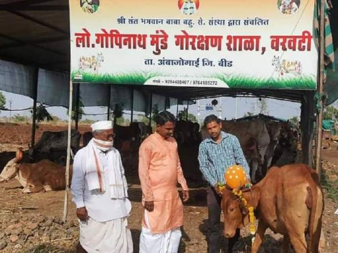 Dohal Jewan for cow made by Goshala A unique example of love for animals | प्राण्यांवरील प्रेमाचे अनोखे उदाहरण; अपघातातून बचावलेल्या गायीचे गोशाळेने केले डोहाळ जेवण