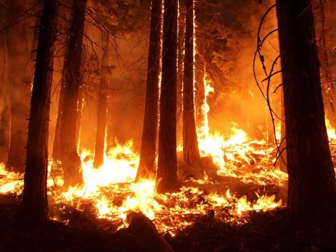 Three forest workers die in forest fire in Gondia | जंगलातील वणवा विझवितांना तीन वनमजुरांचा होरपळून मृत्यू