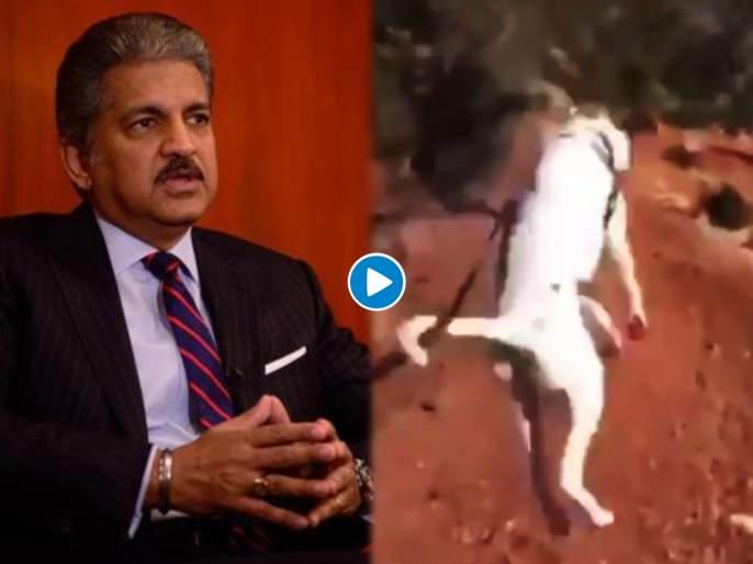 Trending Video : Anand mahindra shared an adorable video of a dog jumping with happiness   आनंद महिंद्रांनी शेअर केला भन्नाट व्हिडीओ; म्हणाले, 'लॉकडाऊननंतर असाच इन्जॉय करणार'......