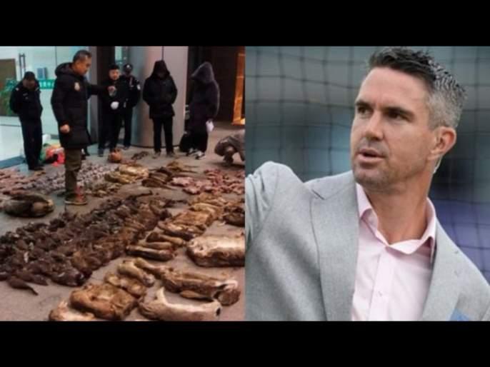 Kevin Pietersen criticizes Wuhan's wet animal market for the spread of Coronavirus svg | चिनी लोकांवर भडकला इंग्लंडचा क्रिकेटपटू; हासडली F#@#@G सणसणीत शिवी