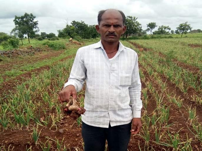 Political leaders will start visiting but when will farmers get help   ओल्या दुष्काळात 'कोरडे' आश्वासन; राजकीय नेत्यांचे नुसतेच दौरे