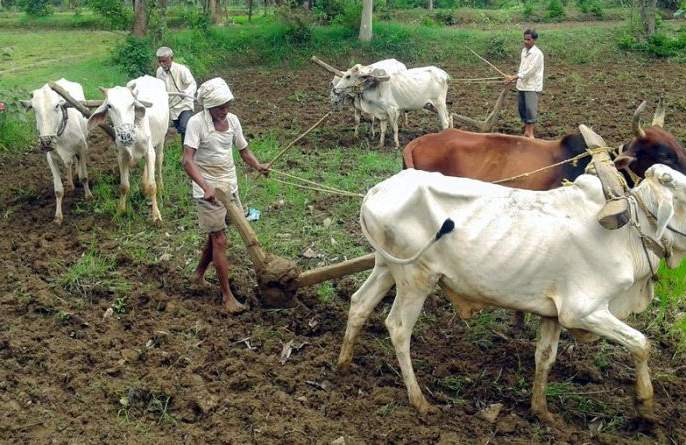 32,000 farmers in Nagpur division awaiting debt relief | नागपूर विभागातील ३२ हजार शेतकरी कर्जमुक्तीच्या प्रतीक्षेत
