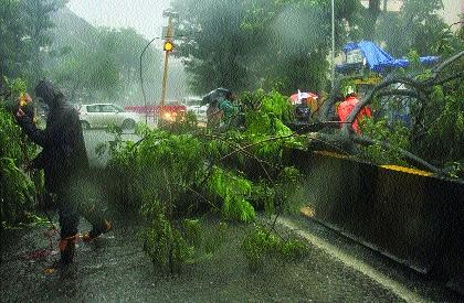 Trees fell at 121 places in Mumbai   मुंबईत १२१ ठिकाणी झाडे कोसळली