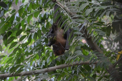 China hosted global project to look at coronavirus in bat populations | China hosted global project to look at coronavirus in bat populations