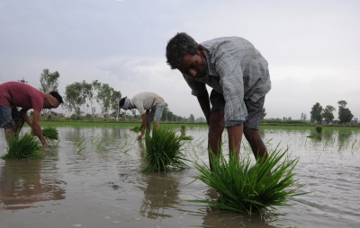 Kharif paddy MSP hiked by Rs 72 per quintal, cotton by Rs 211   Kharif paddy MSP hiked by Rs 72 per quintal, cotton by Rs 211