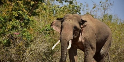 Free elephants from captivity, they are not for joyrides: Activists   Free elephants from captivity, they are not for joyrides: Activists