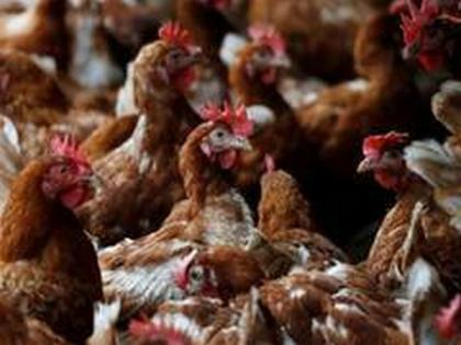 India's 1st Bird Flu death: NCDC conducts contact tracing, says none of close contacts have symptoms   India's 1st Bird Flu death: NCDC conducts contact tracing, says none of close contacts have symptoms
