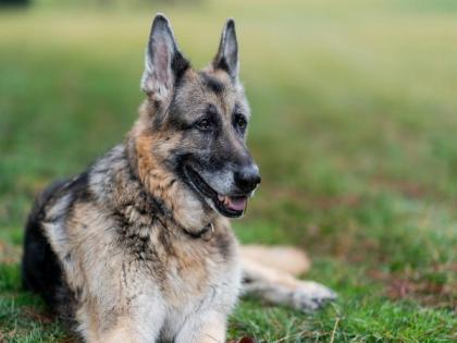 Joe Biden announces death of 'beloved' family dog Champ | Joe Biden announces death of 'beloved' family dog Champ