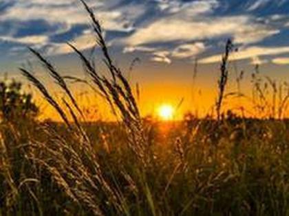 8.61 lakh MT of wheat procured in Punjab's Ludhiana | 8.61 lakh MT of wheat procured in Punjab's Ludhiana
