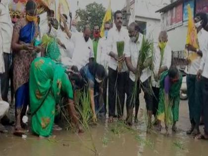 TDP cadre sow paddy on damaged road to protest against poor condition of road | TDP cadre sow paddy on damaged road to protest against poor condition of road