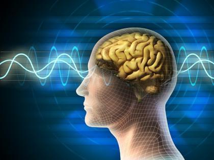 Study uses eel-like protein to control brain | Study uses eel-like protein to control brain