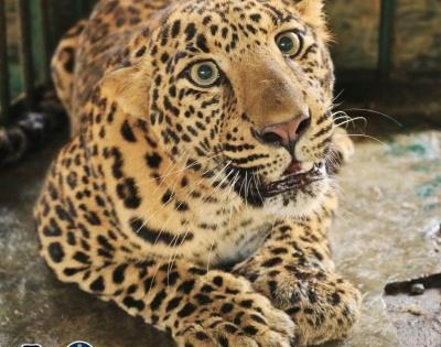 UP to have 5 leopard rescue centres | UP to have 5 leopard rescue centres