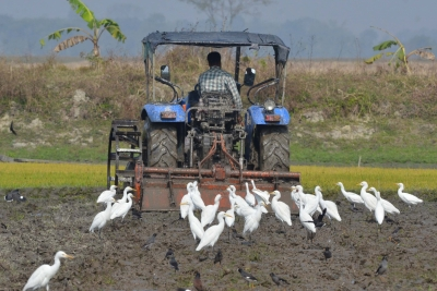 Reconfigure agricultural producer support: UN report   Reconfigure agricultural producer support: UN report