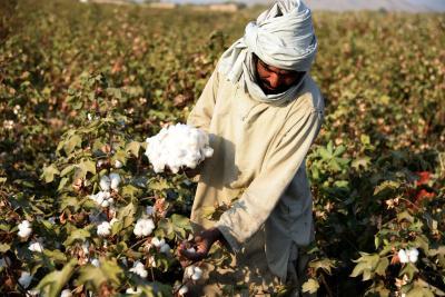 Monsanto officials were on snoop list as Maharashtra set up probe for Bt cotton | Monsanto officials were on snoop list as Maharashtra set up probe for Bt cotton