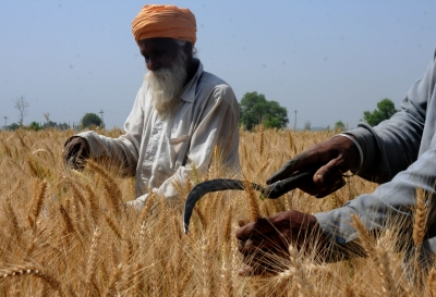 12.12% more wheat procured this year so far: Centre   12.12% more wheat procured this year so far: Centre
