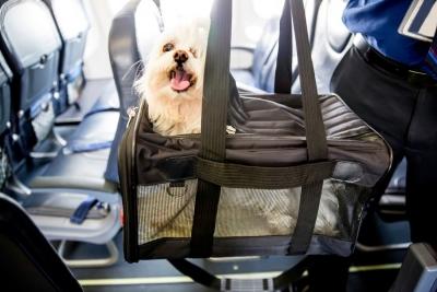 Furry Companion: Man books Air India business class cabin for pet dog | Furry Companion: Man books Air India business class cabin for pet dog