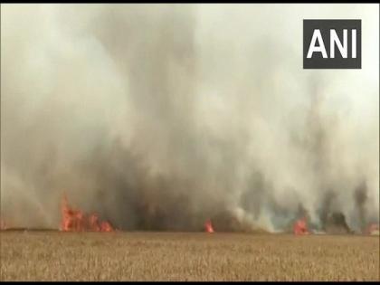 Uttarakhand: Wheat crop spread across 25 acres destroyed by fire | Uttarakhand: Wheat crop spread across 25 acres destroyed by fire