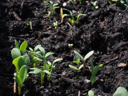 Study suggests some food contamination starts in the soil   Study suggests some food contamination starts in the soil