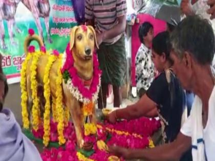 Andhra: Bronze statue of dog erected on its fifth death anniversary   Andhra: Bronze statue of dog erected on its fifth death anniversary