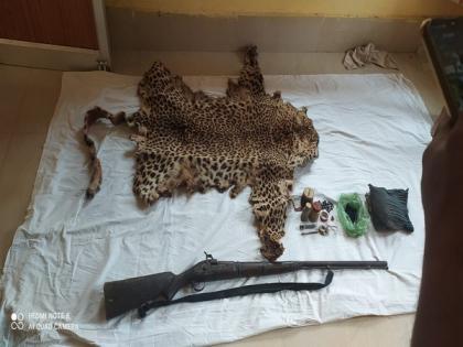 Leopard skin seized in Odisha's Boudh, poacher held | Leopard skin seized in Odisha's Boudh, poacher held