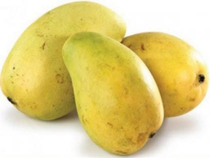 India expands mango export footprint; GI certified Fazil mango shipped to Bahrain | India expands mango export footprint; GI certified Fazil mango shipped to Bahrain