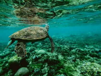 Tiny organisms shed big light on ocean nutrients: Study   Tiny organisms shed big light on ocean nutrients: Study