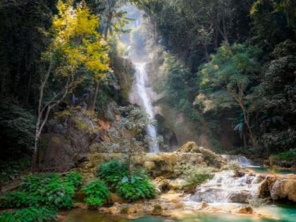 Scientists develop new tracking system for monitoring danger to rainforests   Scientists develop new tracking system for monitoring danger to rainforests