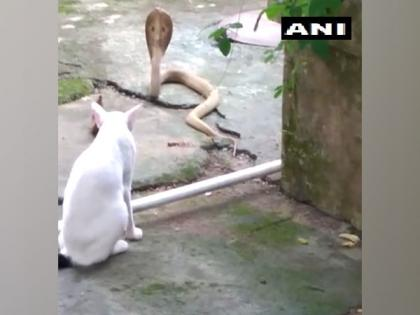 Pet cat protects Bhubaneswar family from cobra, stands guard for 30 mins   Pet cat protects Bhubaneswar family from cobra, stands guard for 30 mins