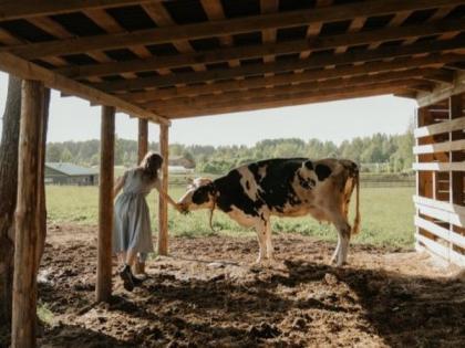 Soybean, linseed oils in cows' diet improve milk quality, researchers affirm | Soybean, linseed oils in cows' diet improve milk quality, researchers affirm