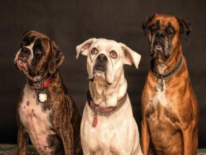 Dogs' aggressive behavior towards humans often caused by fear | Dogs' aggressive behavior towards humans often caused by fear