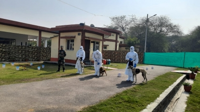 Can dogs detect Covid with more accuracy? - Lokmat