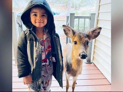 4-year-old brings home baby deer after venturing in the woods for outing   4-year-old brings home baby deer after venturing in the woods for outing