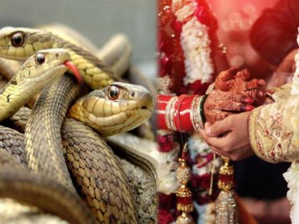 OMG! This community gives 21 venomous snakes to daughter as dowry | OMG! This community gives 21 venomous snakes to daughter as dowry