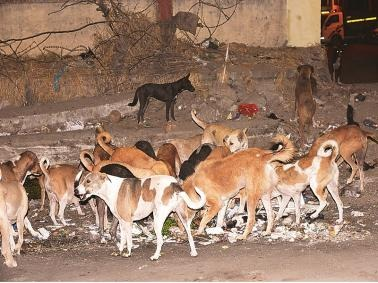 Andhra Pradesh: 300 stray dogs killed with poisonous injections | Andhra Pradesh: 300 stray dogs killed with poisonous injections