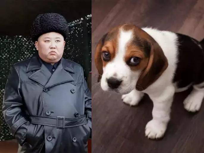 Kim Jong Un Orders Killing Of Pet Dogs In The Country For Food English Lokmat Com