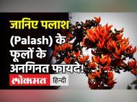 Palash पौधे के फायदे: मोतियाबिंद, गठिया जैसी बीमारियों में सहायक है पलाश का पौधा, ऐसे करें इस्तेमाल!