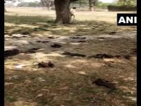 Uttar Pradesh: गोरखपुर में 52 चमगादड़ों की मौत, इलाके के लोगों को कोरोना वायरस संक्रमण का शक