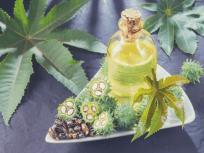 बवासीर, कब्ज, गंजापन, जोड़ों का दर्द, दाद, गांठ,सिर से लेकर एड़ी तक हर मर्ज की दवा है यह पौधा