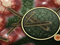 Cat Que Virus: Corona के बाद चीन में 'कैट क्यू' वायरस आया सामने, ICMR ने India में जारी की चेतावनी